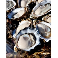food/eOysters7698